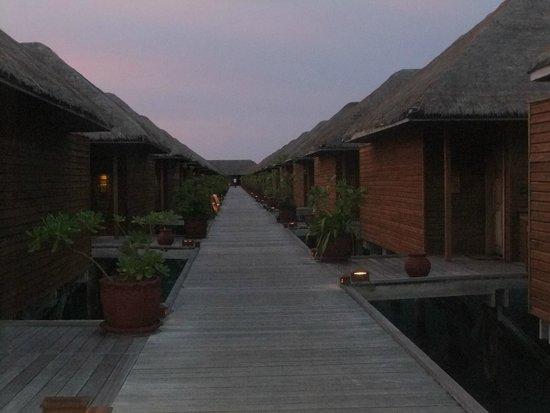 Meeru Island Resort & Spa : Water Villas