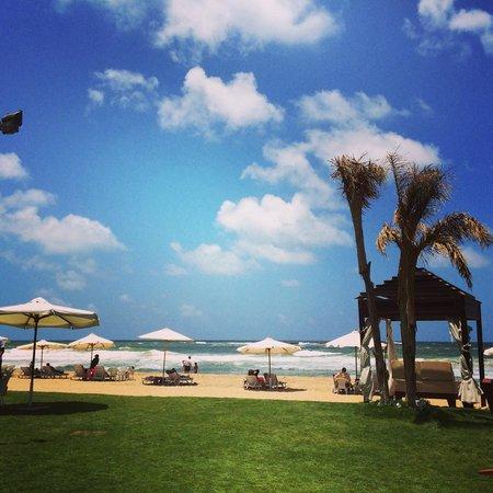Hilton Alexandria Corniche: ����