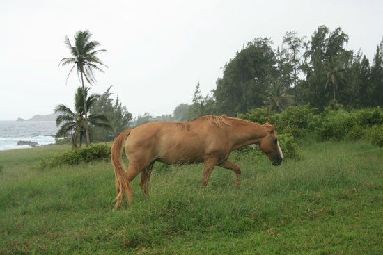 Travaasa Hana, Maui: adjacent pasture