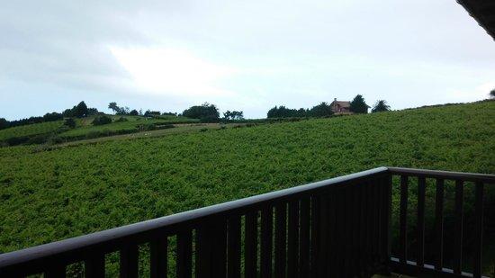 Hotel Rural Gaintza: Vistas de los viñedos desde la terraza