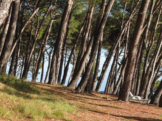 Wellness Hotel  Aurora: Pine shade beside the beach