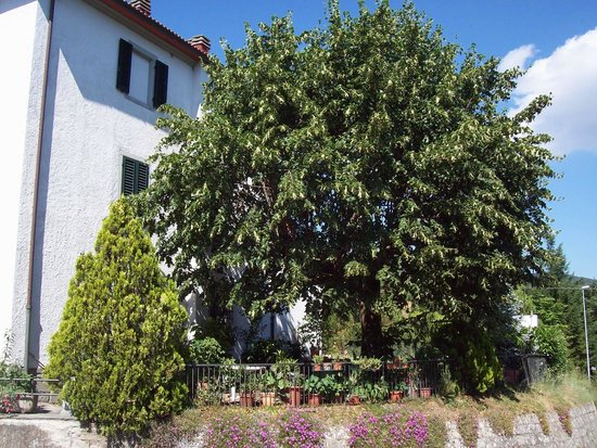 Albergo Ristorante Gualtieri : Vista Giardino