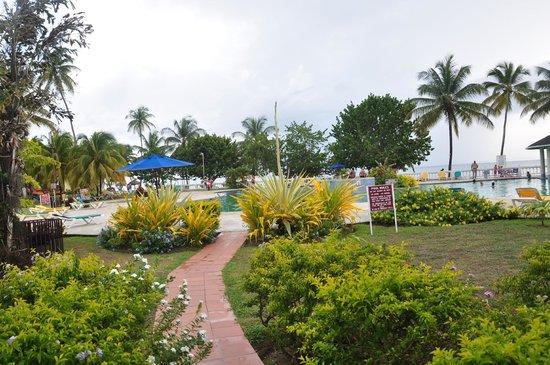 Turtle Beach by Rex Resorts : pool