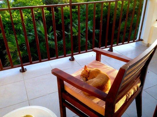 Royalton Cayo Santa Maria: Chat sur le balcon de notre chambre :-)