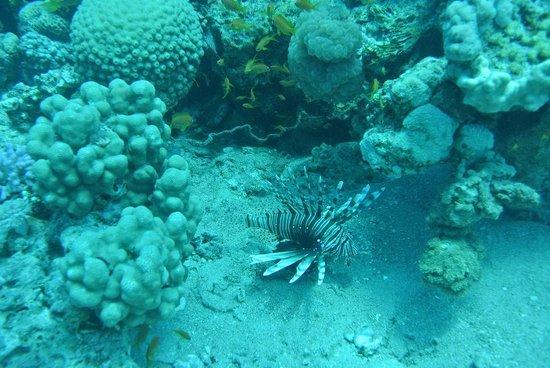 Mr Frogman Dive Center: King Abdullah Reef