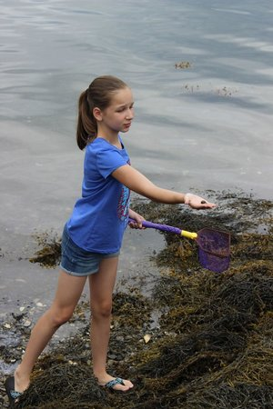 Maine State Aquarium: tide pooling fun