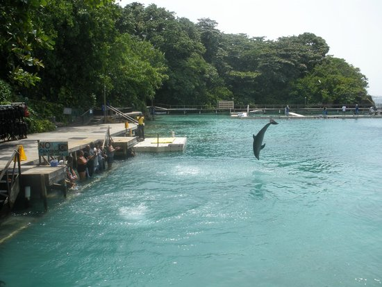 Dolphin Cove : Dolphins doing their thing