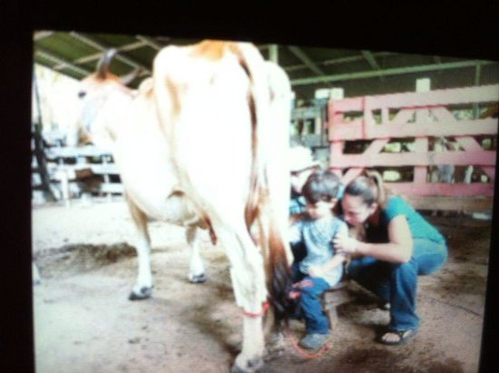 Fidelito Ranch & Lodge : Milking cows