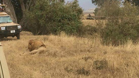 Ngorongoro Crater: Pride of Lion
