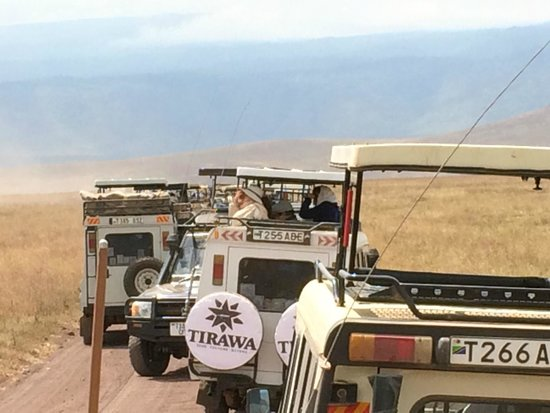 Ngorongoro Crater: Traffic Jam in the crater