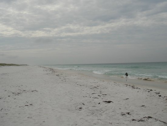 Flippers Dolphin Tours: beach on Shell Island