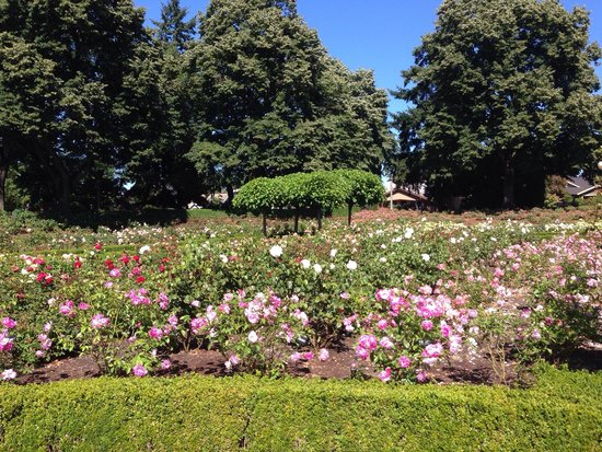 Peninsula Park and Rose Gardens: So many roses