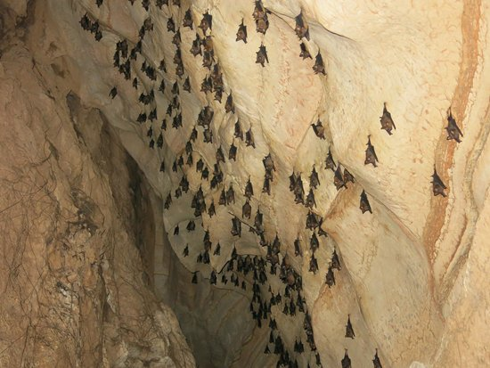 Khao Mai Kaew Cave: bat cave on your way out, they have the last laugh