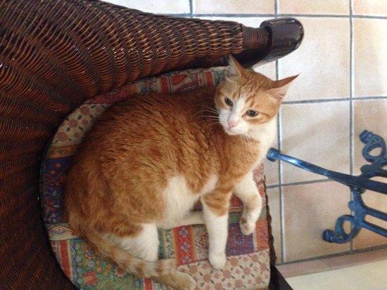 Estella Hotel Apartments: Местный котик ( я звала его бубенчик)