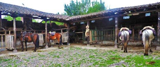 Hacienda La Alegria: ready to head out