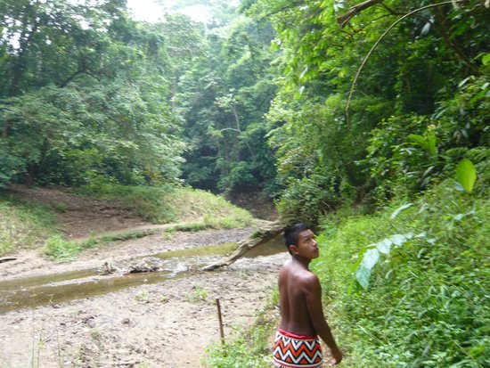 Emberá Village Tours & More: Our young guide taking us to the water fall & searching for wildlife, but we didn't encounter an