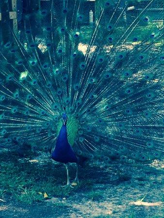 Emerald Coast Wildlife Refuge Zoological Park: Majestic!