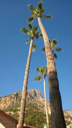 SENTIDO Lykia Resort & Spa: Havuz Başı Palmiyeler