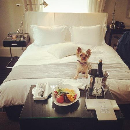 Hotel Montefiore: Also my dog chipaw got the birthday delight..... Thx!! Love :)