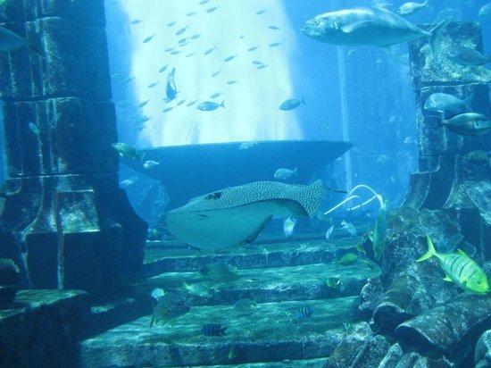 The Lost Chambers Aquarium: Main tank