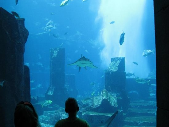 The Lost Chambers Aquarium: The view into lost world of Atlantis