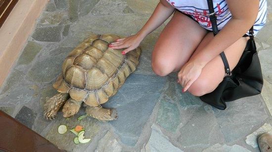 Aquaworld Aquarium & Reptile Rescue Centre: turte