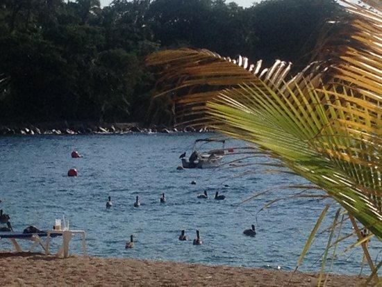 Barcelo Puerto Vallarta: Playa Mismaloya Hotel Barcelo Vallarta