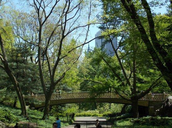 Central Park: Caminos del parque