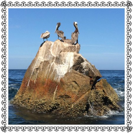 Playa del Amor : Pelican's Chilling Land's End Cabos San Lucas