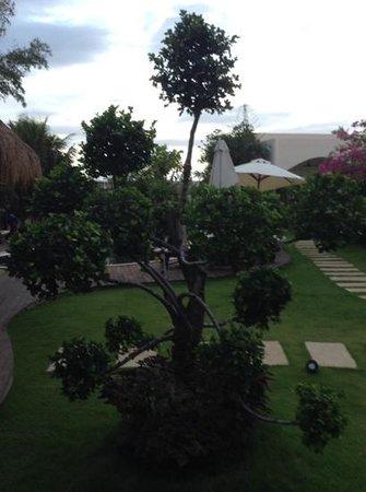 Navutu Dreams Resort & Wellness Retreat : giardino curatissimo