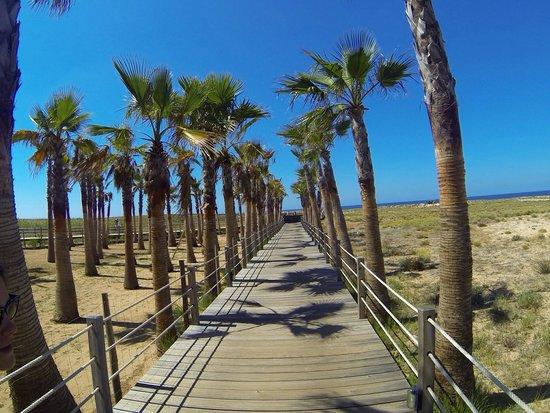 Vidamar Resort Algarve: Les pontons qui donnent accès à la plage de Salgados