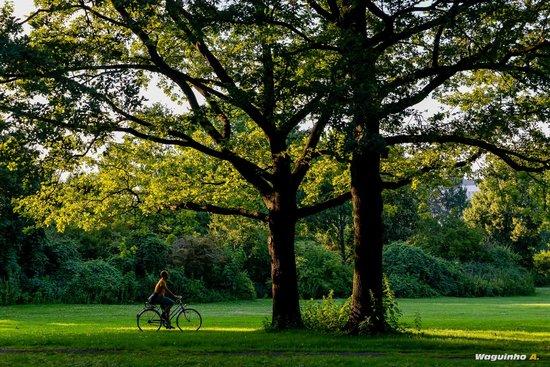 Tiergarten : Bike riding in the park