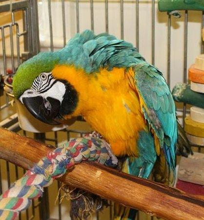 Beauport Inn : Refuge pour oiseaux....