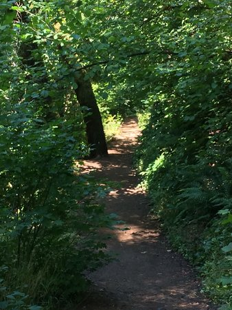 Hood River, Орегон: Trail for 2.7 mile loop. (The easy part of this loop)
