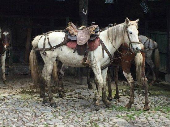 Hacienda La Alegria: One of many beautiful horses