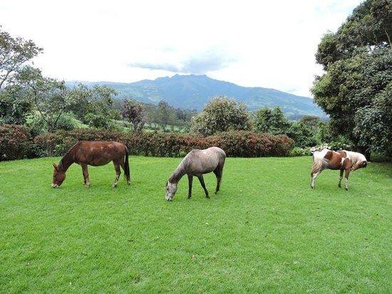 Hacienda La Alegria: Front yard