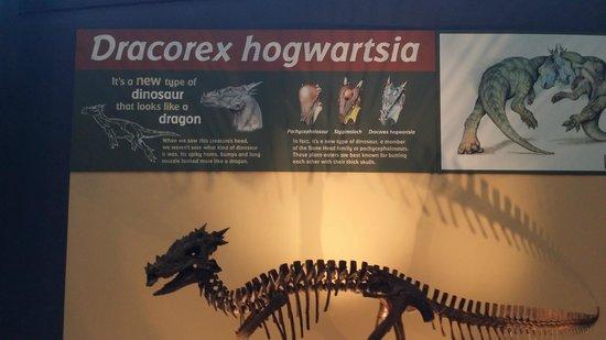 Children's Museum of Indianapolis : Dragon!