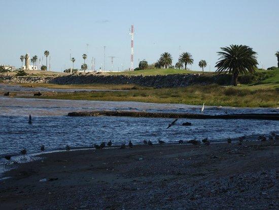 Rambla de Montevideo: costa de montevidéu