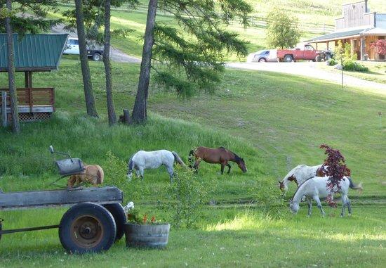 Bull Hill Guest Ranch : Ranch horse's