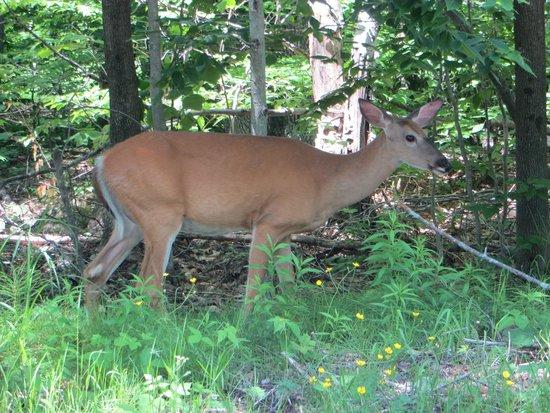 Killbear Provincial Park: Deer