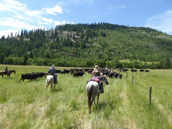 Bull Hill Guest Ranch: Cattle drive