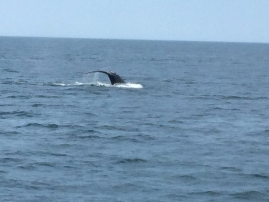 Dolphin Fleet Whale Watch: Humpback Tail