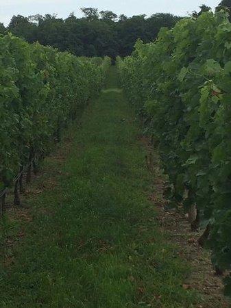 Paumanok Vineyards : beautiful vineyards!
