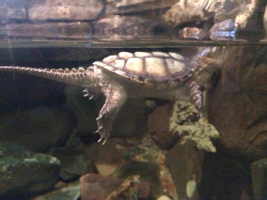 Hidden Oaks Nature Center: Turtle