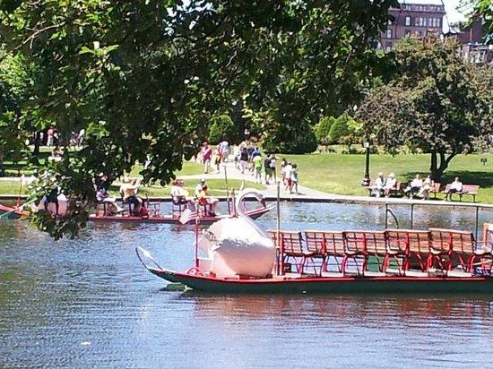 Swan Boats : Swan boat