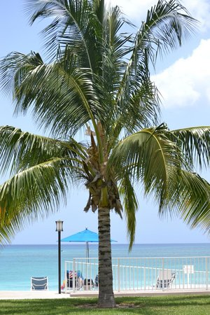 Cayman Reef Resort: Grounds