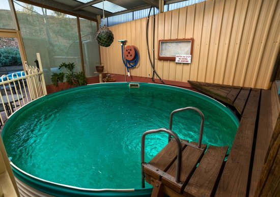 Down to Erth B &B: Plunge pool