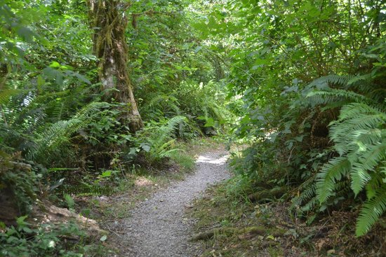 Redwood National Park: trail to our camp