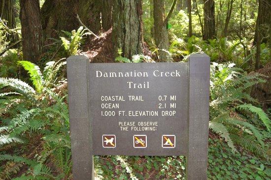 Redwood National Park: damnation