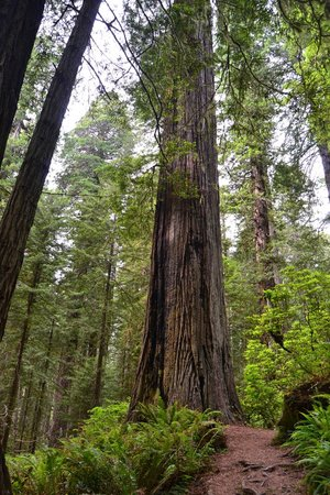 Redwood National Park: wow!